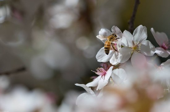 Sutton, Australia: busy bee
