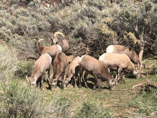 Taos, NM: Sticking together