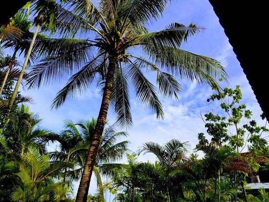 Angkor Palace Resort & Spa Foto