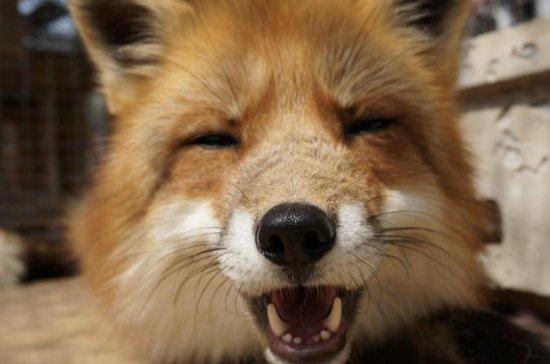 Fox Village Visit - Tokyo, Japan
