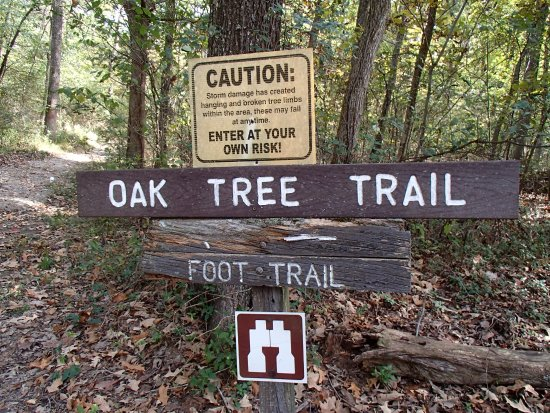 Golconda, IL: Oak Tree Trail