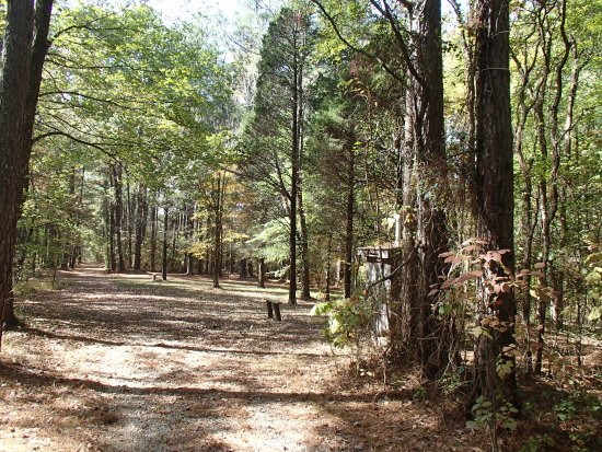 Golconda, IL: Pine trail opening up to group camping area