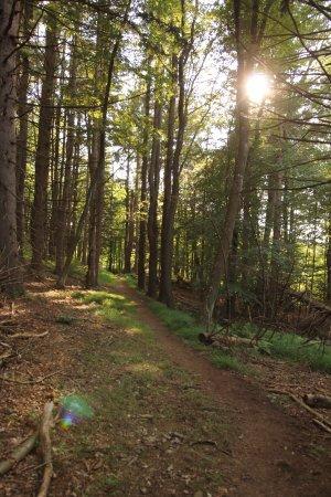 Croton on Hudson, État de New York : forest trail