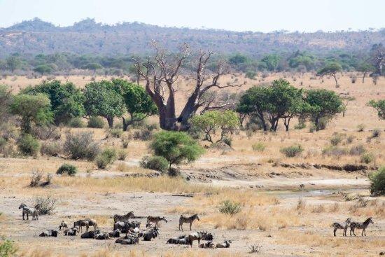 Tarangire National Park, Tanzania: Tarangire offers amazing views.