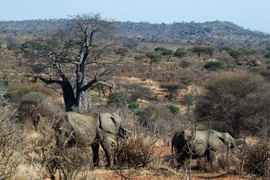 Tarangire National Park, Tanzania: Love the diverse landscapes