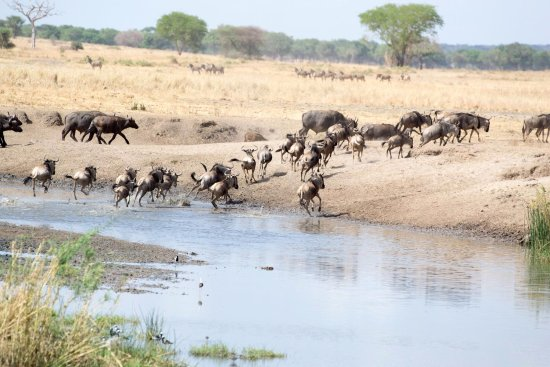 Tarangire National Park, Tanzania: That one was particularly interesting! Beautiful scenes.