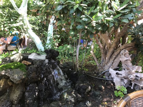 Socratous Garden: photo1.jpg
