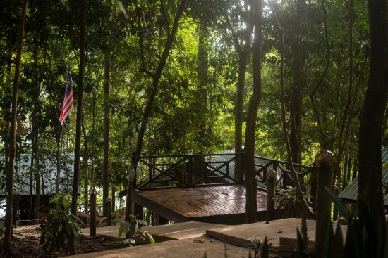 Gerik, Malaysia: Our forest deck to chill on.