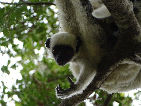 Bekopaka, Madagascar: Montagne Tsingy