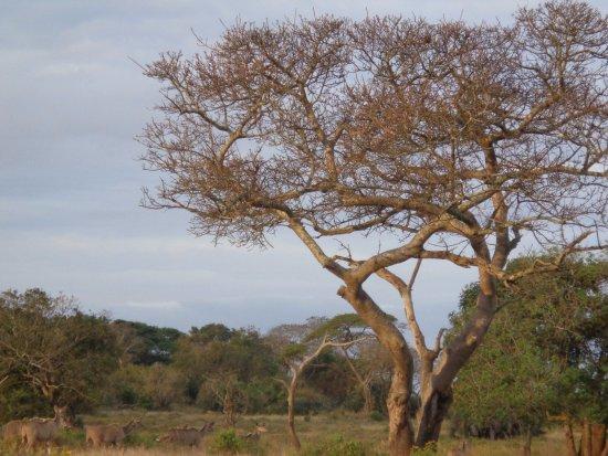 St Lucia, Südafrika: flora interesante