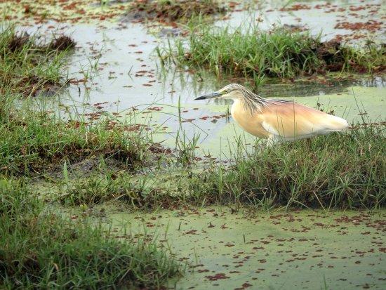 Amboseli National Park, Kenya: oiseaux très divers