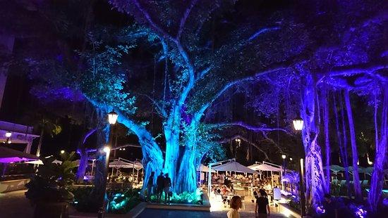 Moana Surfrider, A Westin Resort & Spa: 中庭のツリーはブルーにライトアップされていました