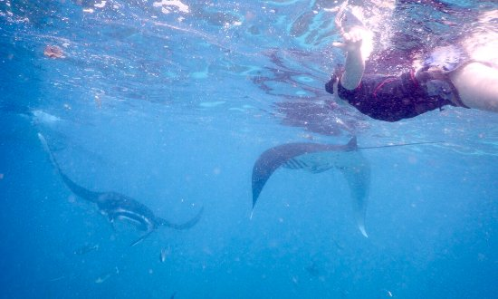 Newbro Surfing: Swimming with the mantas