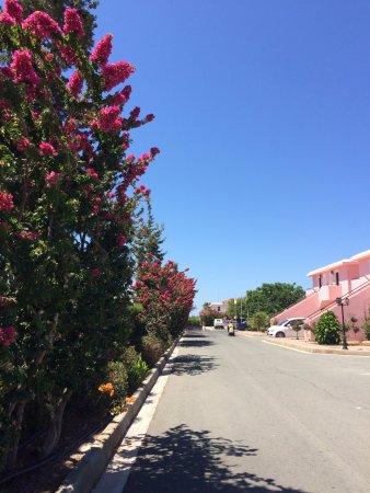 """""""Akamanthea Holiday Village"""", въездная дорога на территории отеля, далее - бесплатная парковка.."""