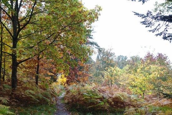 Haywards Heath, UK: gardens in autumn