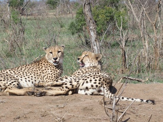 Manyeleti Game Reserve, Sydafrika: photo3.jpg