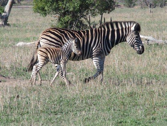 Pungwe Safari Camp: photo4.jpg