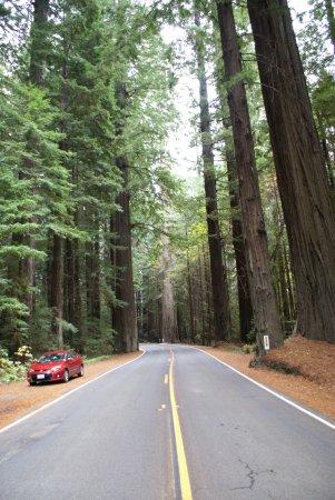 Weott, Californien: Avenue of Giants