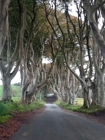 Ballycastle, UK: Dark Hedges from the Game of Thrones