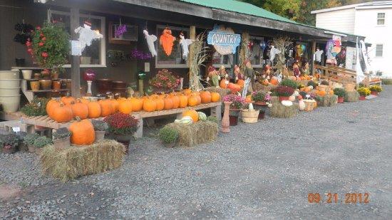 Windham, Estado de Nueva York: Pumpkins, pumpkins,pumpkins