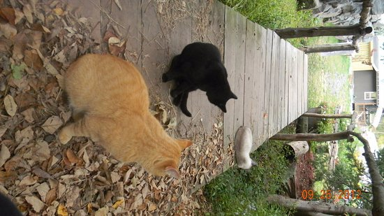 Windham, Nova York: Our kitties are very friendly!
