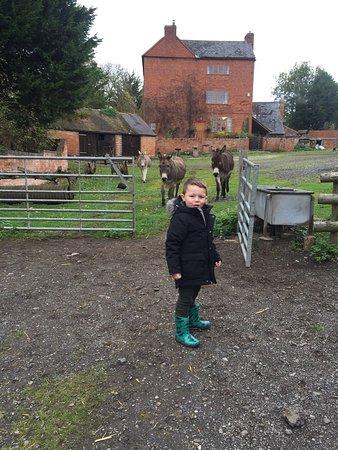 The Green Farm: photo2.jpg