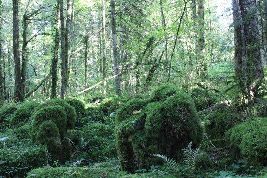 La Forêt de la Joux