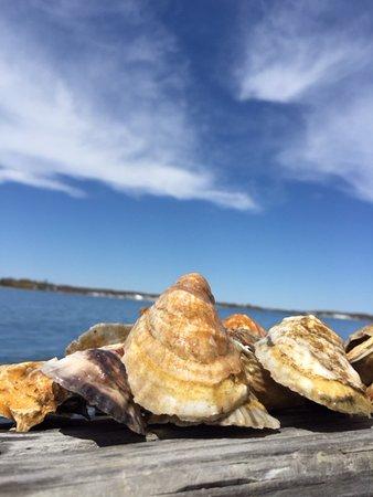 Southold Shindig Oysters