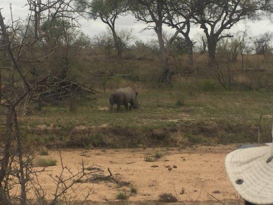 Senalala Luxury Safari Camp: Rhino tracked down on foot