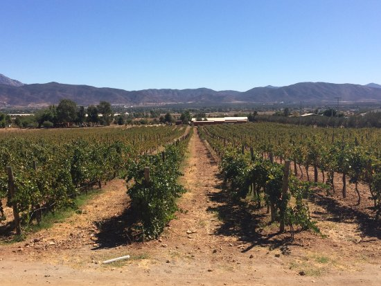 Guadalupe Valley Wine Tour