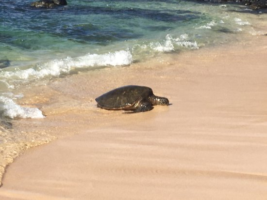 Paia, Hawái: photo3.jpg