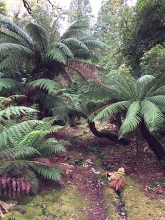 Derreen Gardens: Exotic Ferns from the far East