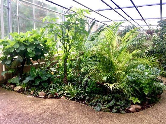 Pour les plantes tropicales picture of jardin des for Plantes pour jardin anglais