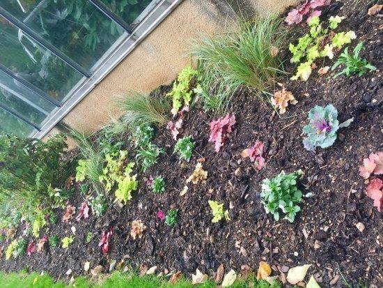 Pour les plantes tropicales picture of jardin des - Jardin des plantes aix les bains ...