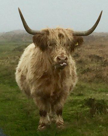 Exmoor National Park, UK: photo0.jpg