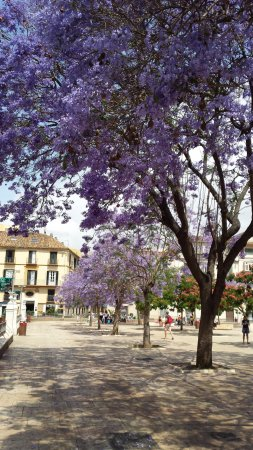 Nice square in may