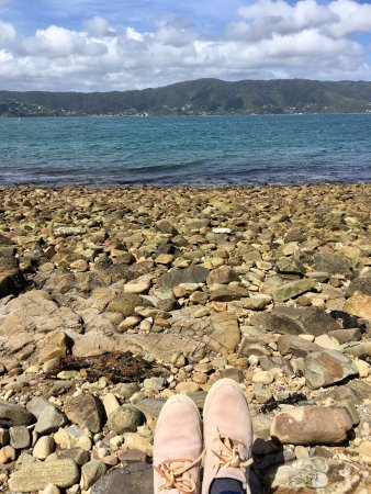 Matiu / Somes Island: Very well preserved island, easy to walk around. You can see a few sheep on the peak. Good to sp