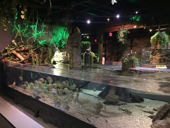 Greater Cleveland Aquarium All You Need To Know Before