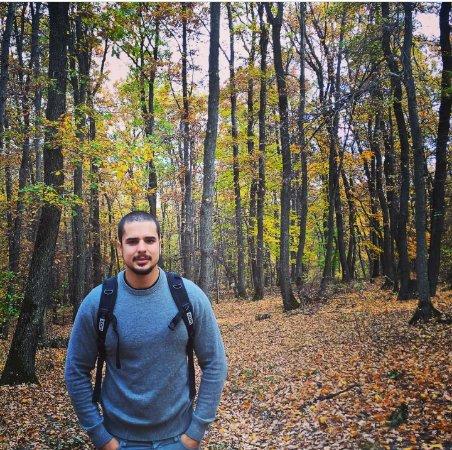 Hoia Baciu Forest-bild