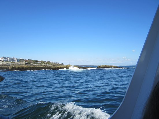 Finestkind Scenic Cruises: The sea was choppy but that's to be expected.