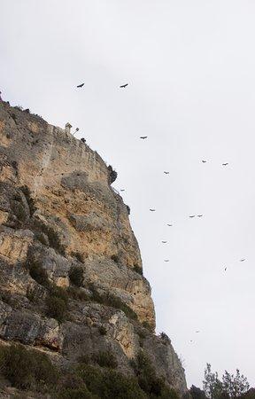 Haro, إسبانيا: Buitres leonados