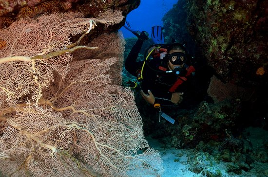 Our instructor ali saif reef oasis dive club - Reef oasis dive club ...
