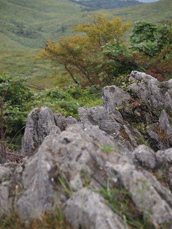 岩肌が見えていて、カルスト台地...