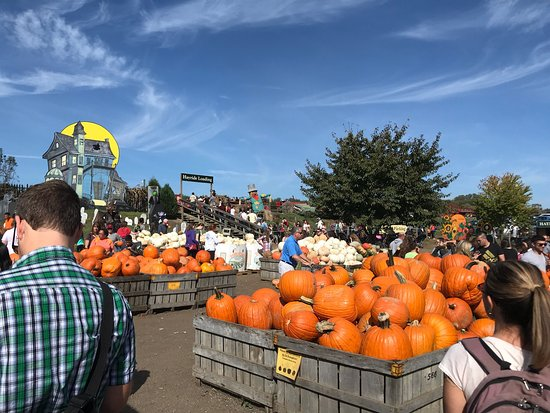 ‪Linvilla Orchards‬