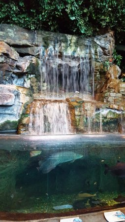 waterfall at one of the aquarium exhibits picture of ripley s