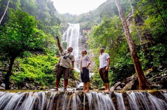 Discover Rain forest of Langkawi  (Dawn...