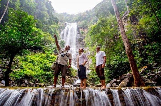 ランカウイの熱帯雨林を発見する(暁または夕暮れ)