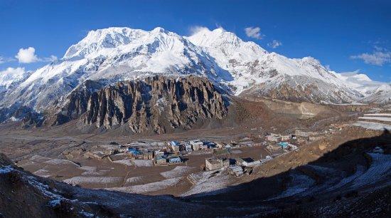 Himalayan Aster Treks