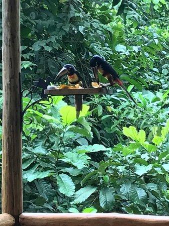 Tree Houses Hotel Costa Rica: photo2.jpg