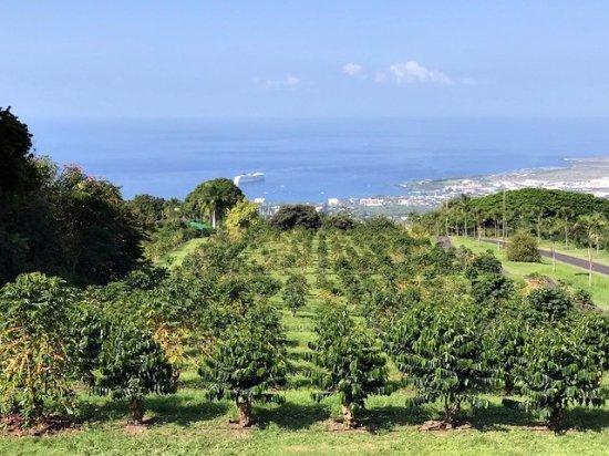 Holualoa, Hawái: UCC農園